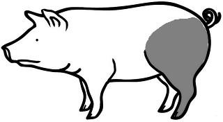 Achterham van het iberico varken
